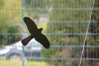 Vogelschutz Aufkleber für Fenster